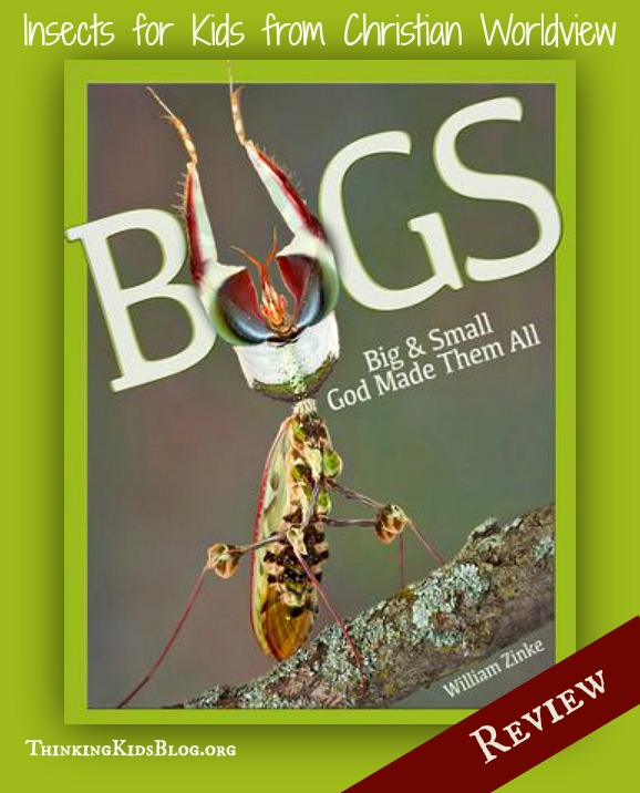 Bugs by William Zinke