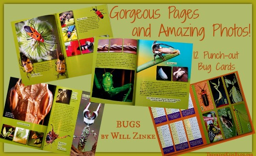 Inside Bugs by Will Zinke